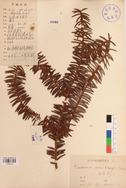 壁纸 植物 蕨类 1024_1525 竖版 竖屏 手机