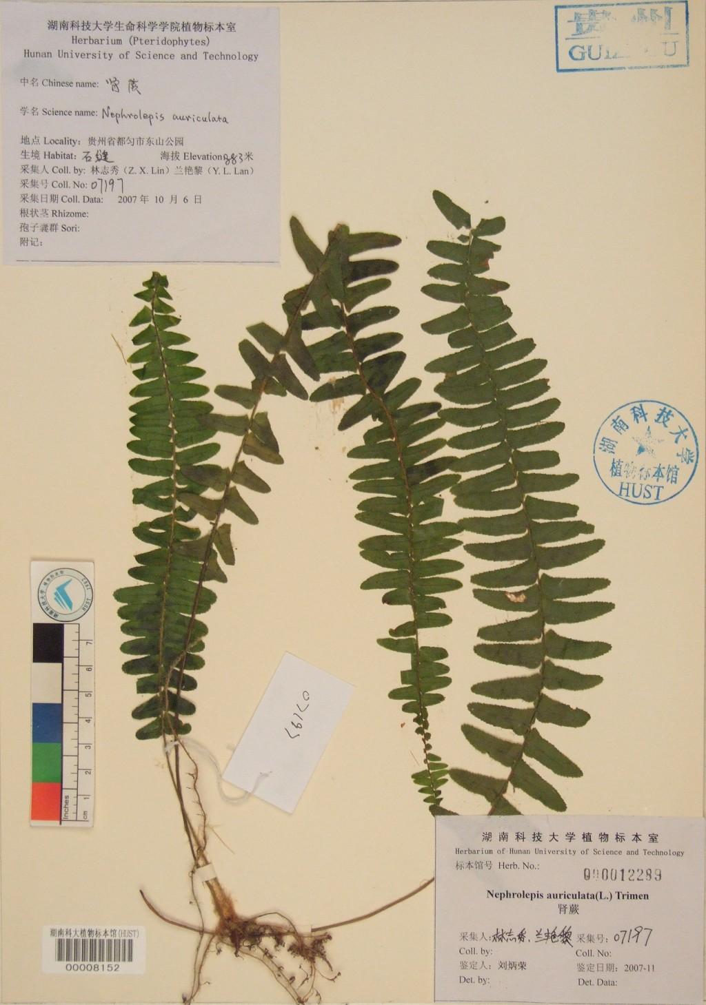 壁纸 植物 蕨类 1024_1459 竖版 竖屏 手机