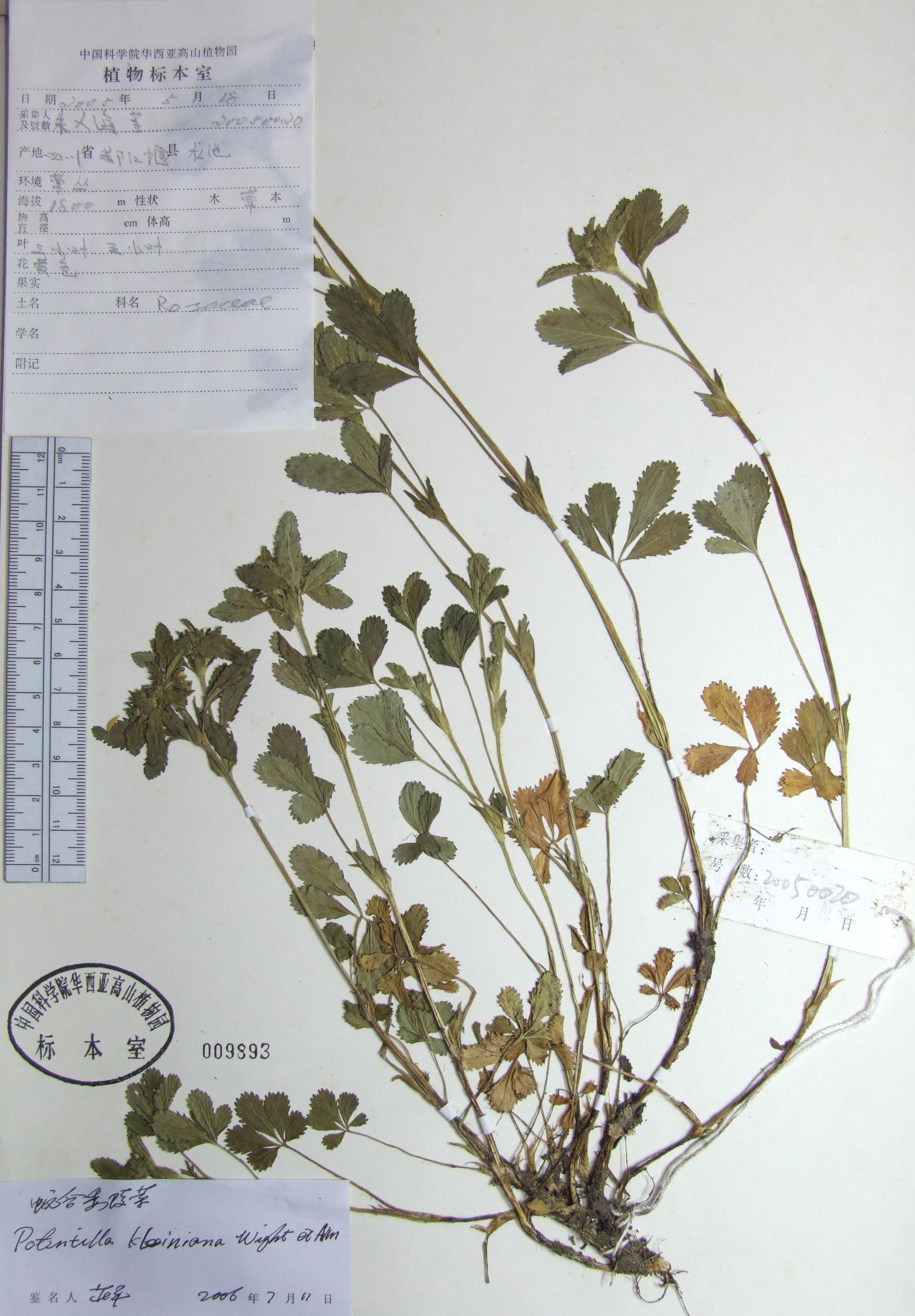 壁纸 植物 蕨类 2298_3303 竖版 竖屏 手机