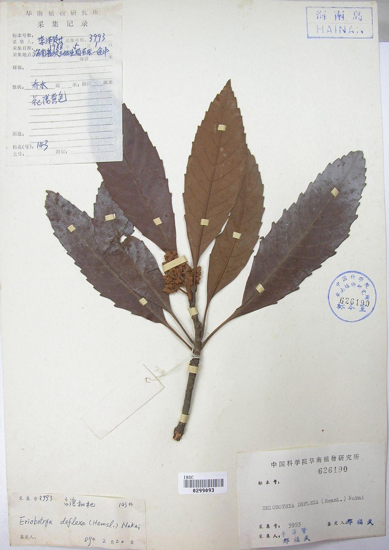 树叶标本素材图